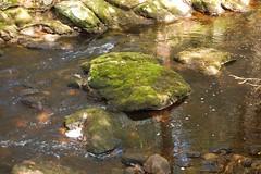 slippery rock (amlapedalemap) Tags: rock creek moss connecticut mystic mysticconnecticut