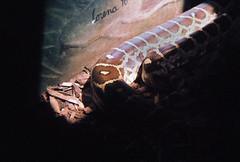 lorna (cltrinkle) Tags: zoo snake sandiegozoo holga135
