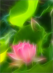 Lotus Flower - IMG_4047 - Fractalius (Bahman Farzad) Tags: china summer india inspiration flower macro green nature fleur beauty yo