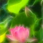 Lotus Flower - IMG_4047 - Fractalius