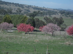 Central NSW (grace_kat) Tags: rural tress