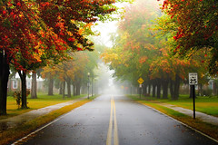 fog season (slight clutter) Tags: street morning autumn trees mist fall leaves fog massachusetts neighborhood iloveflickr northeast slightclutter katyahorner slightclutterphotography