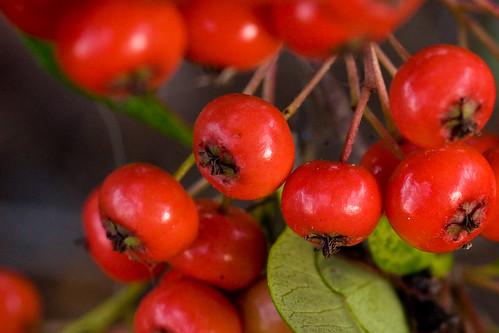 Berry Me