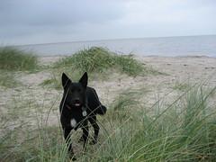 Ricky an der Nordsee