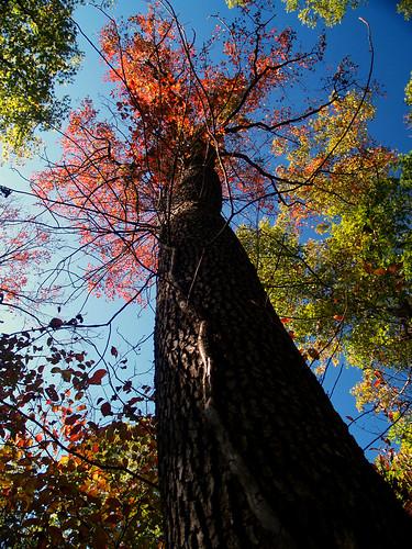 Fall at Kings Bluff
