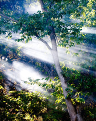 Sunbeams and Chestnut (nosha) Tags: sun sunlight mist tree green fall nature beautiful beauty leaf newjersey nikon october natural nj beam vision bark shade 2008 sunbeam mercercounty pennington d300 digitalworld nosha october2008 noshalikes