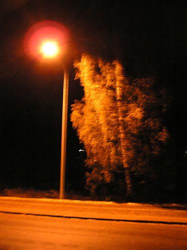 Puu katulampun valossa