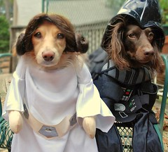 Princess Honey and Darth Teddy (Doxieone) Tags: dog dogs halloween star starwars costume princess mosaic darth wars vader 31 leia mostpopular ggg 1869102908 3511411012008 47915110508 halloweenfall2008set