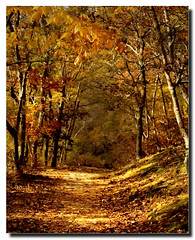 Beech Forest Trail, Provincetown, Cape Cod (Nancy Y. Bray) Tags: autumn shadows provincetown capecod