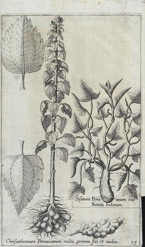 010- Plantas desconocidad en Europa