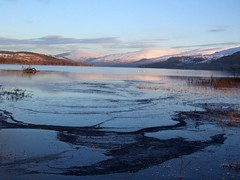 Loch Tay (nz_willowherb) Tags: winter snow ice see scotland tour perthshire visit tourist visitor killin whooper to go visitkillin seekillin gotokillin