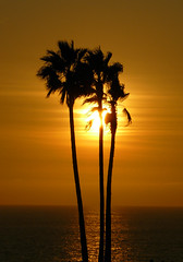 PalmTrees (magic4hire1969) Tags: ocean trees sunset sky sun reflection water silhouette glow palm trunk glowing trunks setting