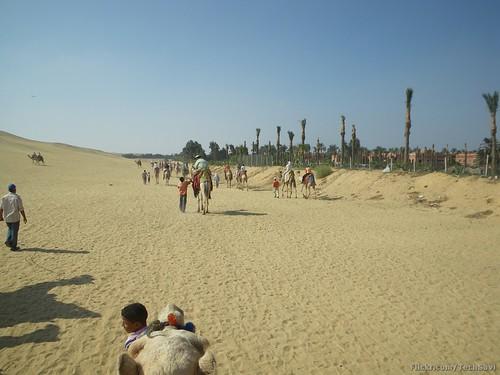 Camel Ride 33