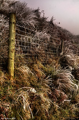 The Fence (Shuggie!!) Tags: fence landscape scotland frost williams karl hdr campsie karlwilliams