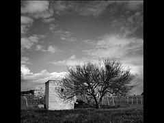 Ulìa (revisited) (_Blaster_) Tags: sky bw italy tree grass rural italia fuji country bn campagna erba f30 cielo finepix albero salento puglia biancoenero blaster casolare sava rurale alberello fujif30 jjjohn