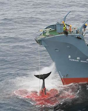 Help to stop the killing of Whales