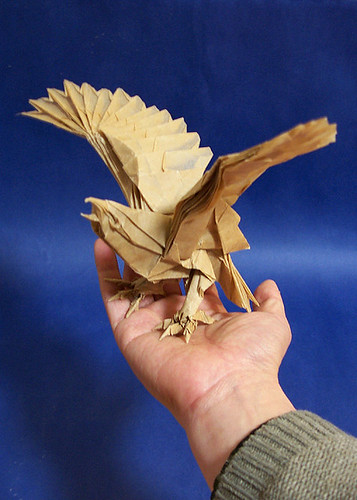 Eagle By Nguyen Hung Cuong Folded Me