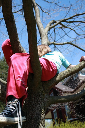tree hugger by you.
