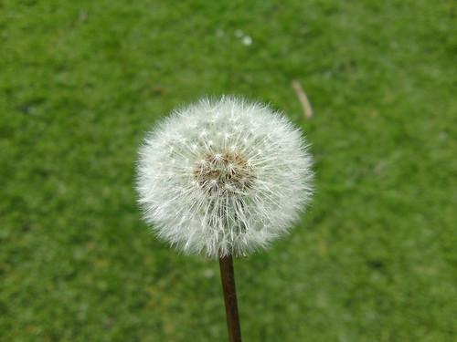 macro ball of fluff