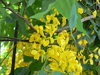 fleurs jaunes Cancun.jpg