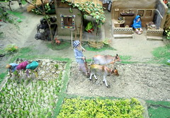 Punjab village scene!