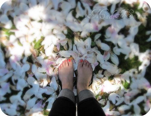tulip magnolia petals