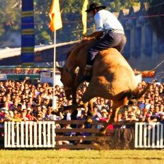 La porfa (Eduardo Amorim) Tags: horses horse southamerica caballo uruguay cheval caballos cavalos prado montevideo pferde cavalli cavallo cavalo gauchos pferd hest hevonen chevaux gaucho  amricadosul montevidu hst uruguai gacho  amriquedusud  gachos  sudamrica suramrica amricadelsur  sdamerika jineteada   americadelsud gineteada  americameridionale semanacriolla semanacriolladelprado eduardoamorim semanacriolladelprado2011