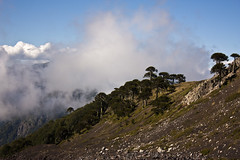 Entre nubes (Pablo.Monte) Tags: chile mountain mountains clouds volcano climb south climbing cerro nubes mountaineering andes sur araucaria cerros cordillera volcan chilean mountainrange araucania sollipulli melipeuco cordilleradelosandes andesmountainrange alpehue potd:country=es