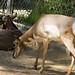 Los Angeles Zoo 036