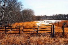 Country lane (Across & Down) Tags: snow rural march brandon fences manitoba fields prairies countrylanes mywinners