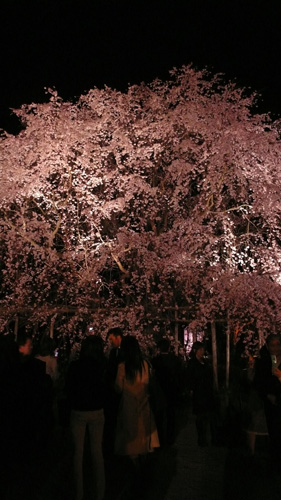 Sakura 2008: Rikugien Night
