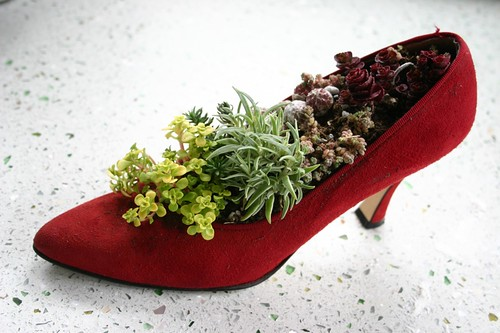 Um, there are succulents in my shoe