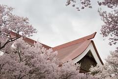 2008高遠城址公園桜まつり 4