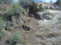 Basalt Dike At Monument (foilfencer85) Tags: monument dike basalt