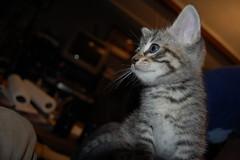 kitten memorials