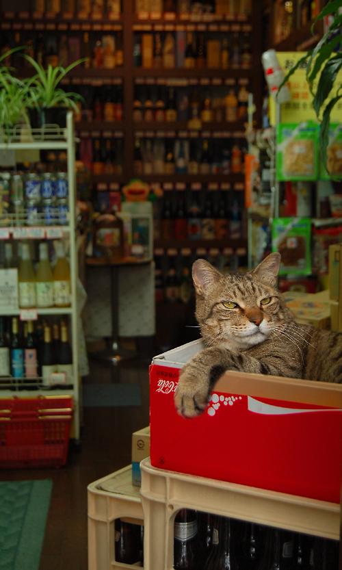 _wine_cat_