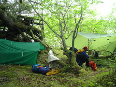 Tarp Camp in Southeast Alaska