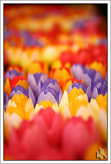 Wooden Tulips (i ea sars) Tags: flower flowers tulip tulips bouquet wooden decoration art painted amsterdam holland netherlands tulipmarket market europe europa colors colorful bokeh canoneos5d canon5d 2470mm 2470l canonef2470mmf28lusm ef2470mmf28lusm fv10 impressedbeauty tulipany tulipan tulipny canon 5d flores flor tulipn kytky kvetiny kvetina    kvtiny kvtina wood fiori blumen