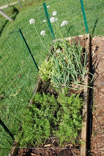 Garden 070508-03