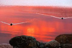 Approach (Riku N) Tags: sunset sea sky suomi finland helsinki vanhankaupunginlahti rocks ducks meri vesi luonto arabianranta
