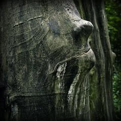 Treeface (gothicburg) Tags: tree green face fairytale photoshop gteborg square sweden gothenburg treetrunk sverige asleep eyeless lightroom magicrealism palabra delsjn guessedgbg stealingshadows trappedinatree vidstoratorp