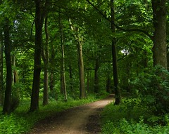 Come for a walk in the Green green forest (algo) Tags: trees england brown white green leaves forest woodland dark topv99 photography interestingness topf50 topv333 bravo track path topv1111 chilterns topv999 explore trunk topv11111 algo topf100 beech ton darkforest 100f chilternhills artisticexpression topv44444 greenforest 50f explore13 lalungastrada visiongroup 200850plusfaves platinumphotography multimegashot