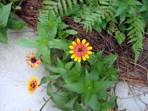 mobile botanical garden flower
