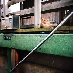 Tokyo Cats #07 (plus45) Tags: zeiss cat tokyo kodak iso400 hasselblad 60mm portra distagon 500cm f35 400nc yanagibashi carlzeissdistagon60mmf35