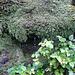 知床:Mt.Rausudake Trek 岩清水(羅臼岳)