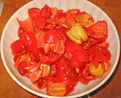 peperoncini habanero (fugzu) Tags: italia peperoncini habanero pimenta