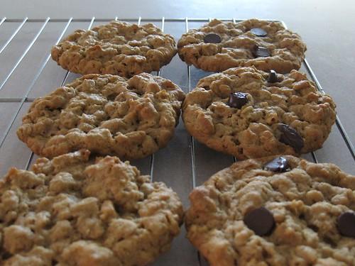 cookieschunkypeanutbutteroatmealchocolatechipster (3)