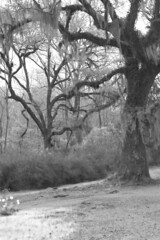 Afton Villa Oaks-9498 (marilynn arrington) Tags: blackandwhite landscape louisiana fauxinfrared