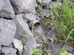 Vessament aigua gris