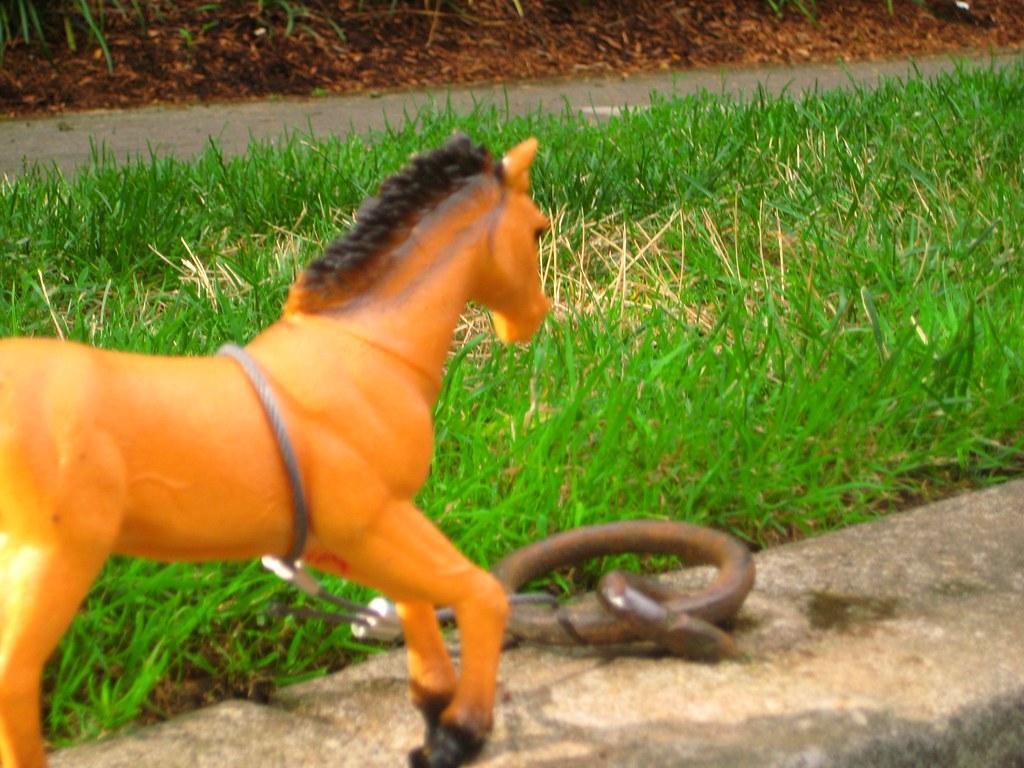 Portland Horsey